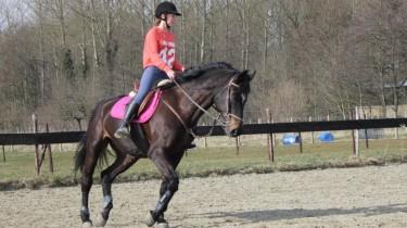 Paard rijden bij de manege