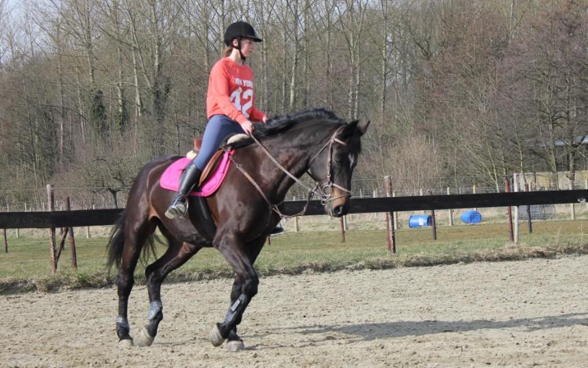 Paardrijden Op De Manege Paard Net