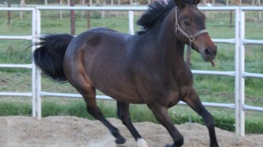 paard kopen