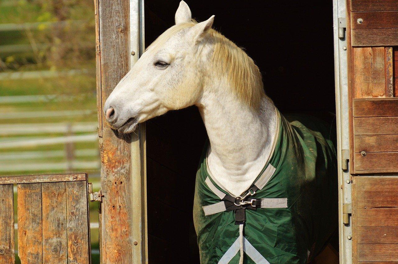 verzorging van een paard