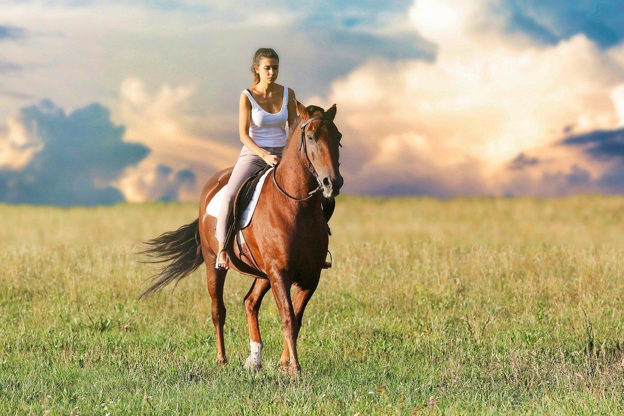 kosten van een eigen paard