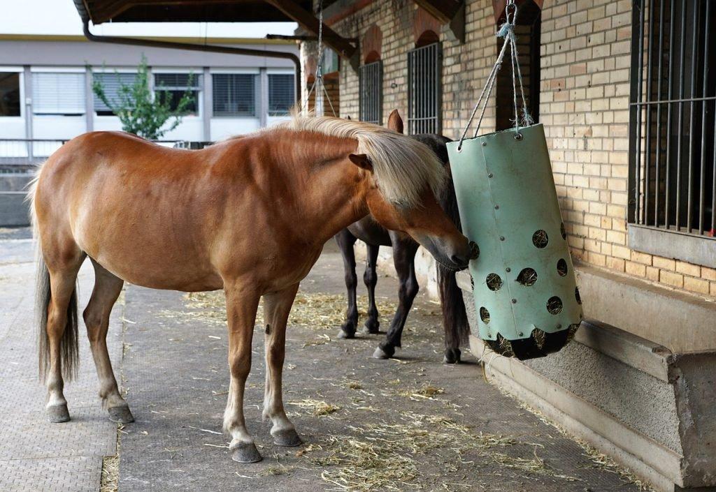maandelijkse kosten van een eigen paard