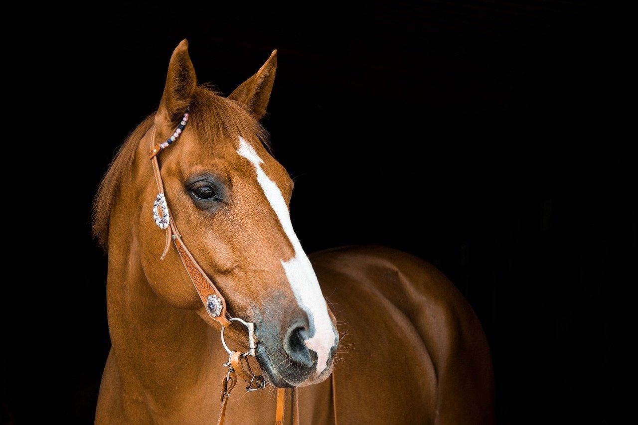 De beste tips om paarden te fotograferen
